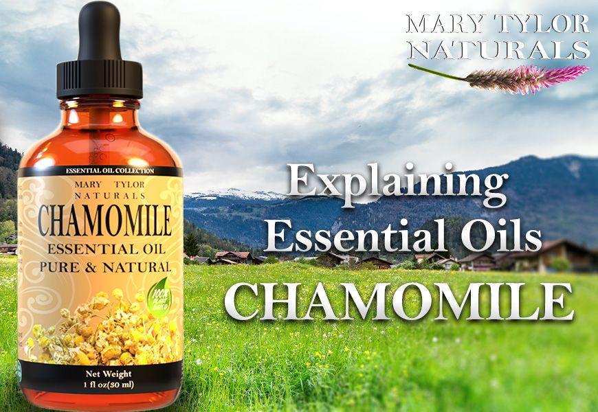 Explaining Essential Oils - Chamomile