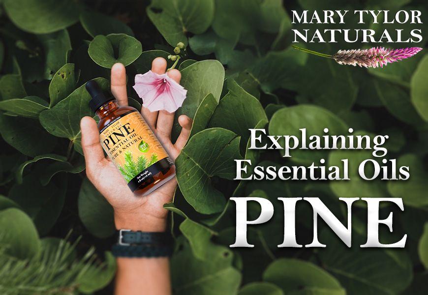 Explaining Essential Oils: Pine