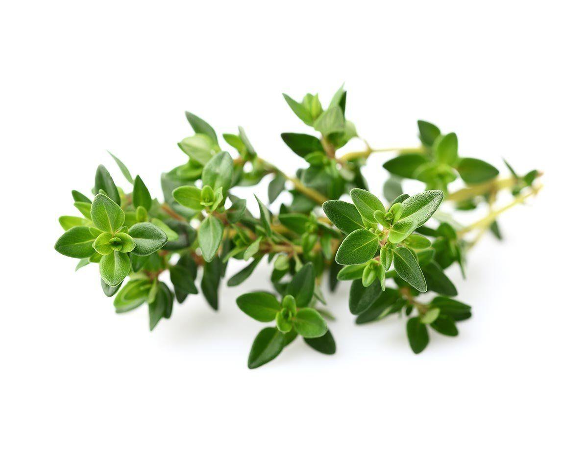 Explaining Essential Oils- Thyme