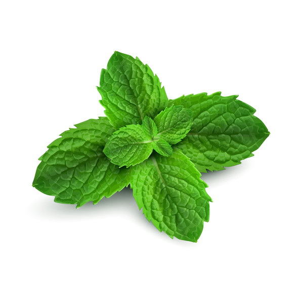 organic peppermint essential oil by mary tylor naturals